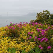 Alcatraz-Gardens-View-of-Golden-Gate-Image-S-Fritz-Gardenista