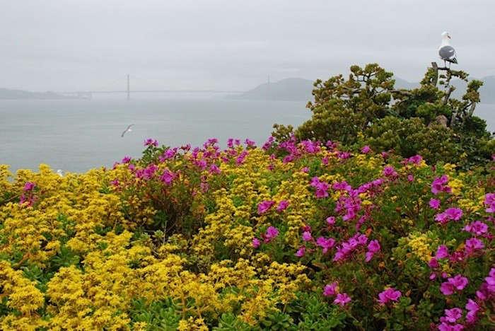 Alcatraz-Gardens-View-of-Golden-Gate-Image-S-Fritz-Gardenista