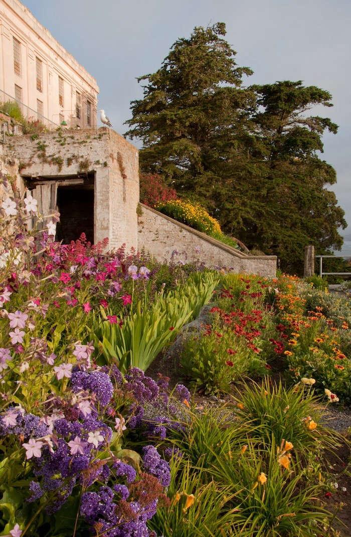 Alcatraz-Officers-Row-Gardens-Limonium-Image-E-Byers-Gardenista
