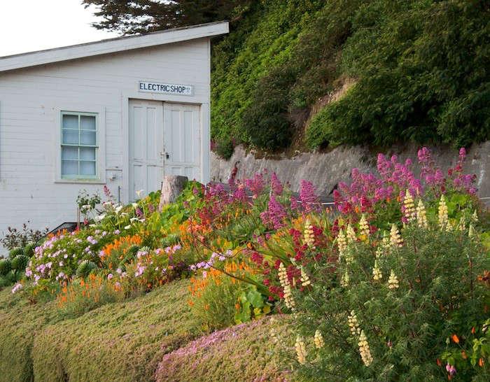 Alcatraz-Roadside-Garden-Image-Elizabeth-Byers-Gardenista