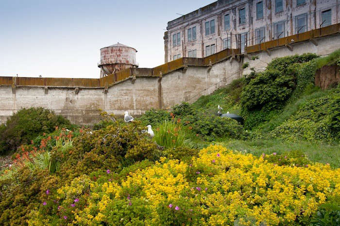 Alcatraz-West-Side-Gardens-Image-Elizabeth-Byers-Gardenista