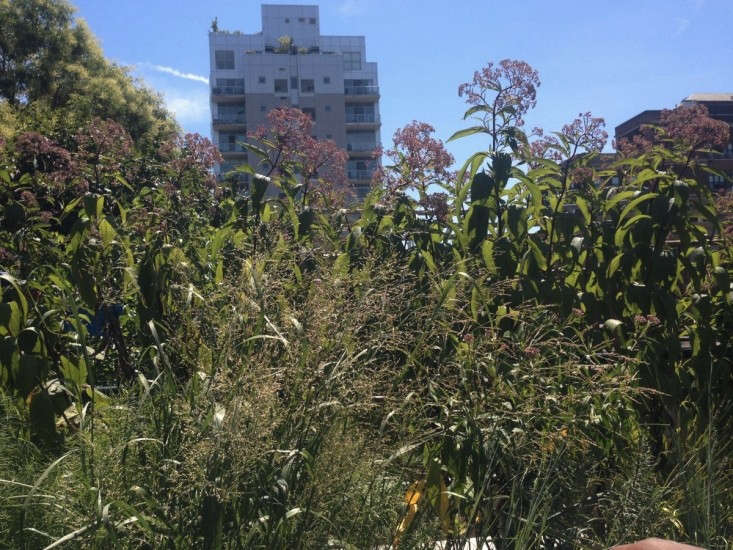 Brooklyn Oasis A City Roof Garden Before And After
