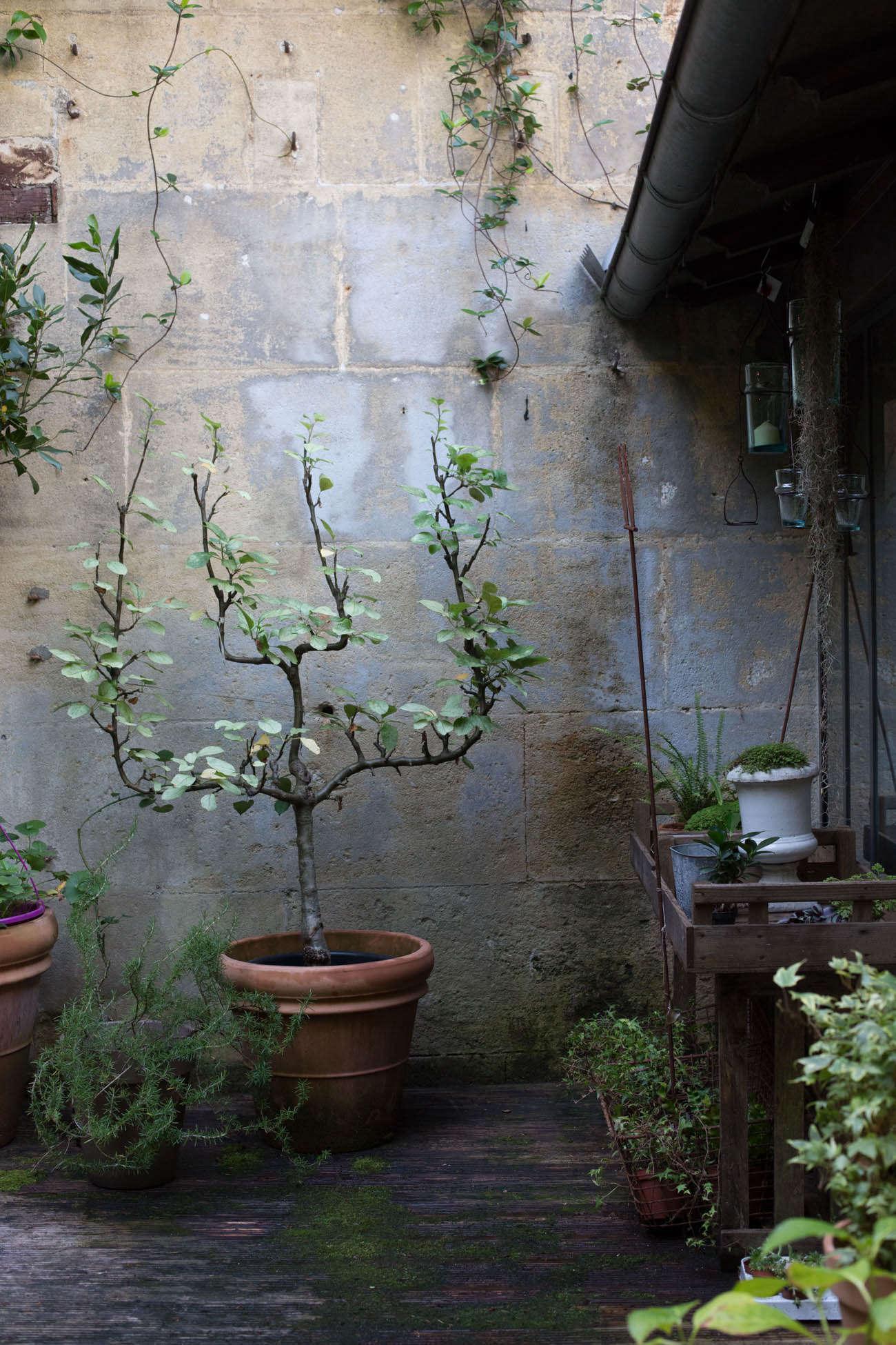 Ambre-store-france-mimi-giboin-gardenista-010