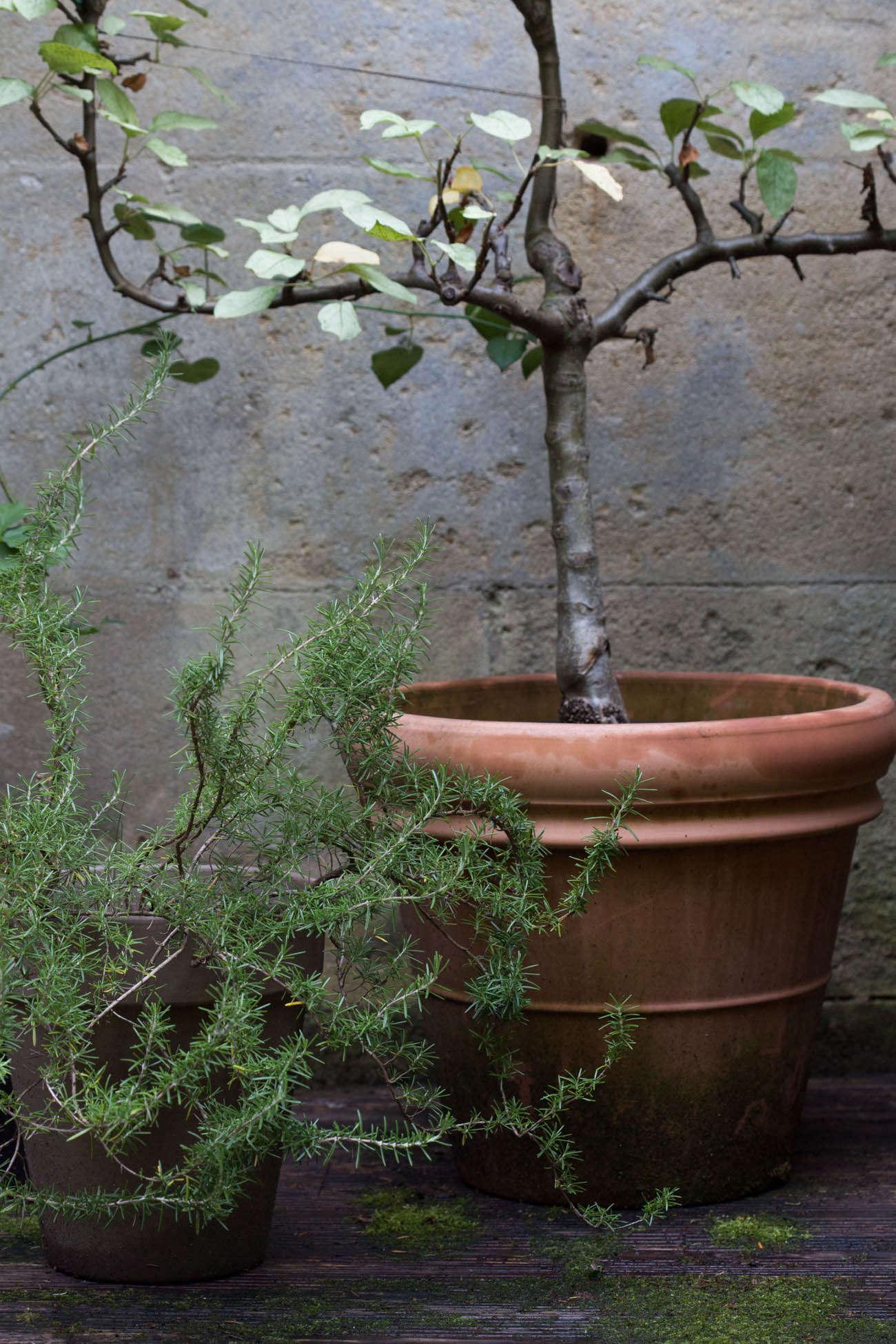 Ambre-store-france-mimi-giboin-gardenista-030