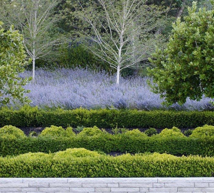 Gardenista Roundup For Love Of Boxwood Gardenista
