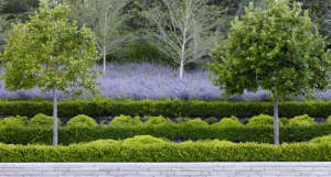 Andrea Cochran Landscapes Hedges and Lavender Terrace, Gardenista