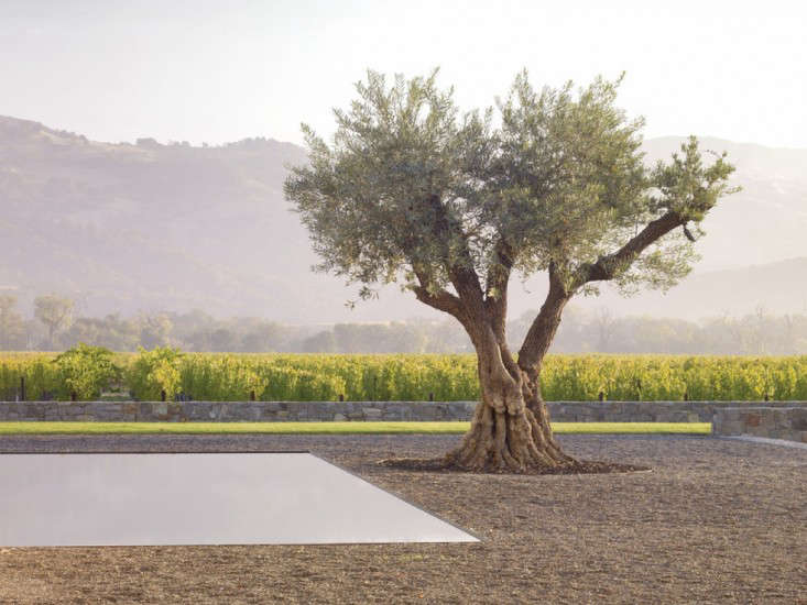 Andrea-cochran-walden-studios-garden-with-olive-tree-gardenista