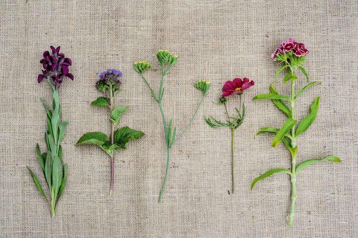 Annuals-and-biennials-photo-Jason-Ingram