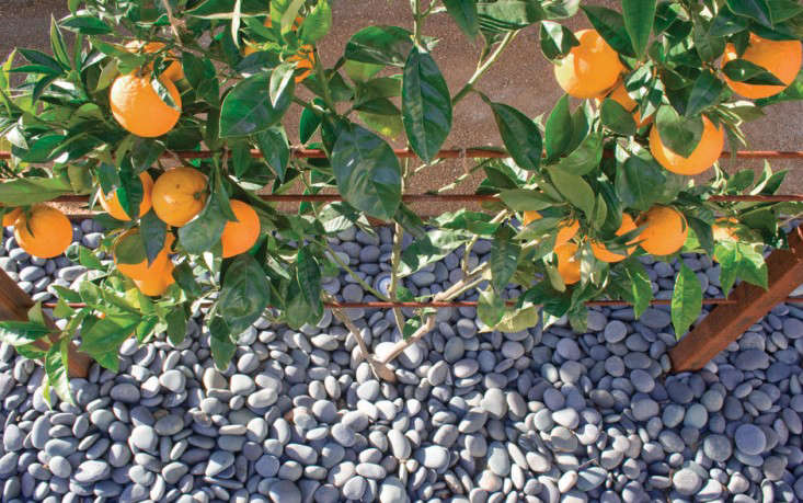 Garden Design Garden Design with Root Crops Grown In The