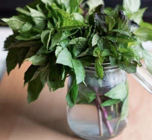Basil in glass jar ; Gardenista