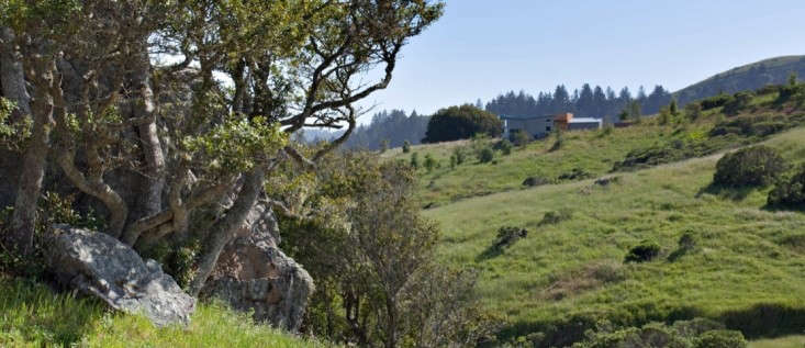 Bernard-trainor-lagunitas-landscape-gardenista