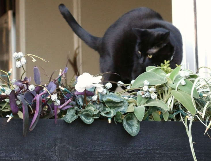 Black Cat with Planter Box with Cyclamen, Gardenista