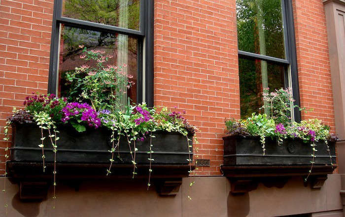 best wood for window boxes 1