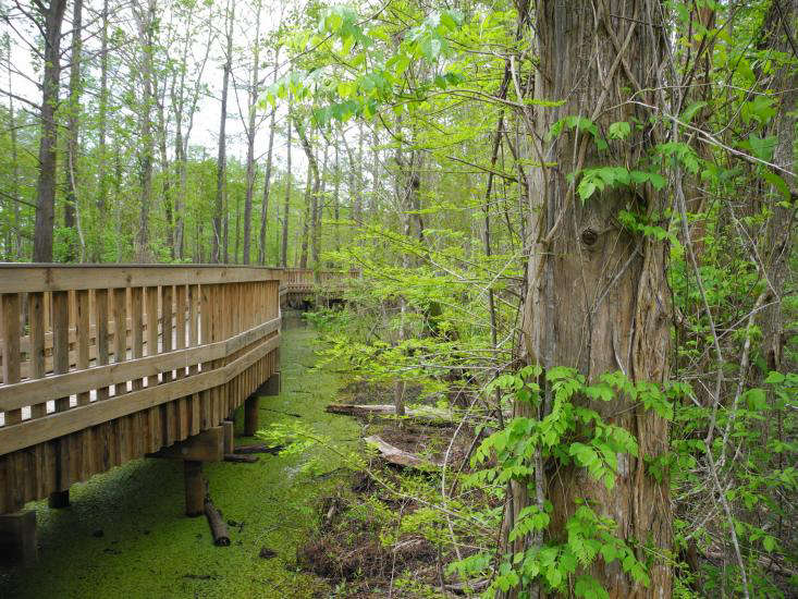 Boardwalk through swamp, Anahuac for gardenista