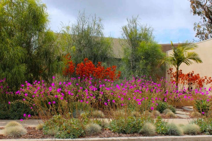 Garden visit drought tolerant in southern california gardenista for Gardens in southern california