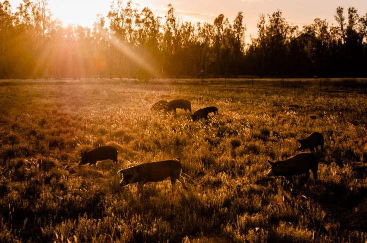 Bundarra-Berkshire-sunset-2