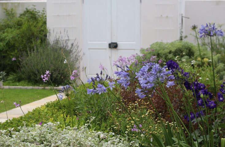 Cape-Town-garden-perennialborder-gardenista