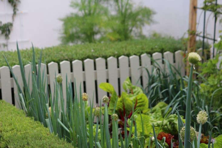 Cape-Town-garden-vegetable1-gardenista