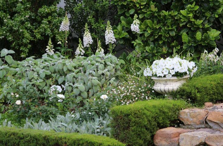 Cape-Town-garden-whiteandgreen-foxgloves-gardenista