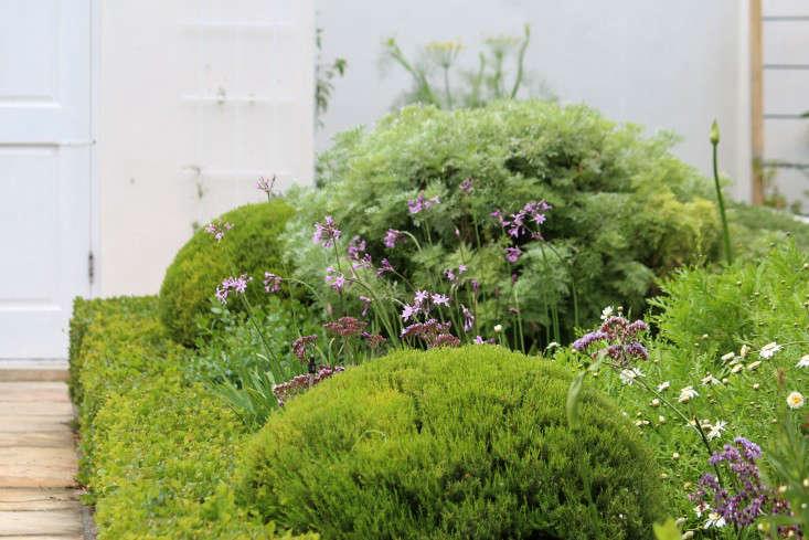 Cape-town-Garden-nativemix-society-garlic-Gardenista