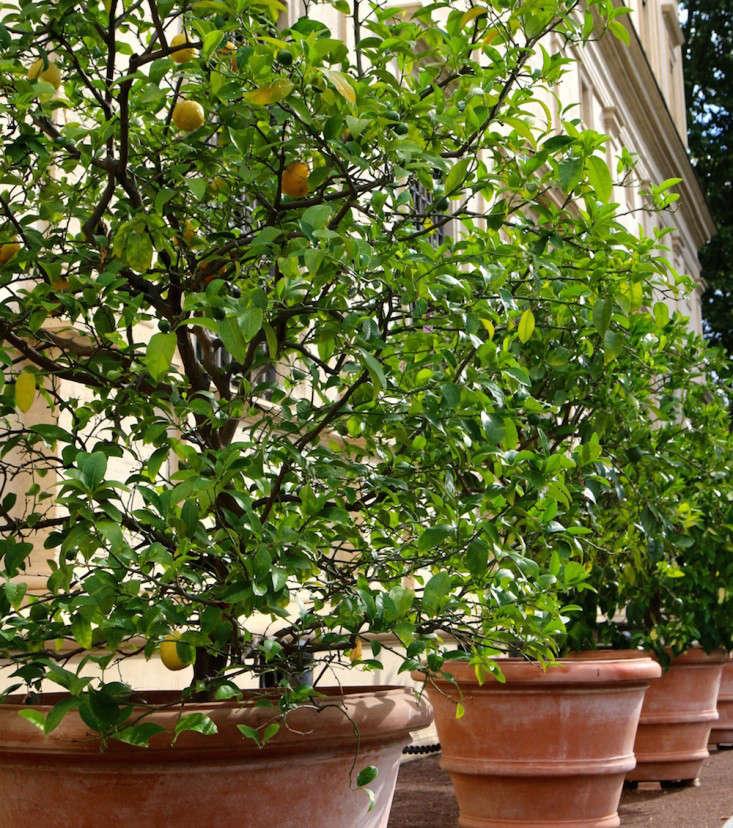 Caring-for-terra-cotta-planters-italy-meredith-swinehart-2