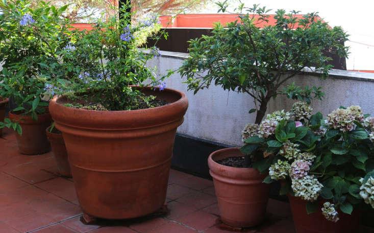 Caring-for-terra-cotta-planters-italy-meredith-swinehart-3