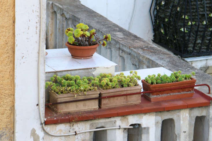 Caring-for-terra-cotta-planters-italy-meredith-swinehart-4