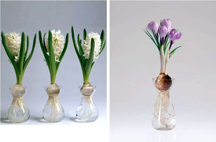 Clear-bulb-forcing-vases-Gardenista