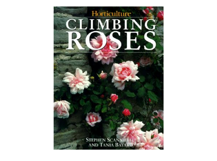Climbing-Roses-Scanniello