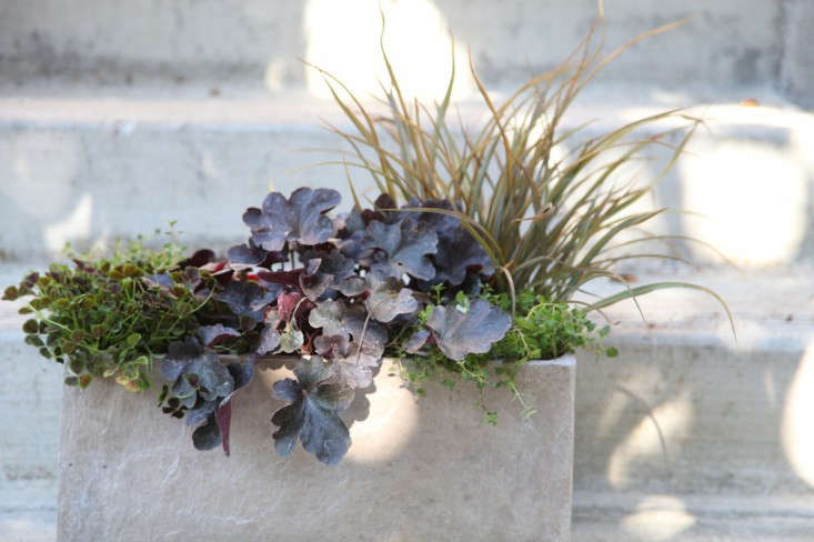 Container Garden with Dark Purple Black Leaves and Grass, Gardenista