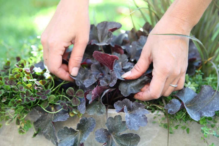 Container Garden with Dark Purple Black Leaves, Gardenista