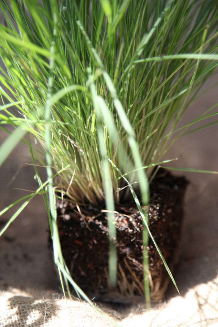 Container of the Week from Gardenista Grass Plant Outside of Container