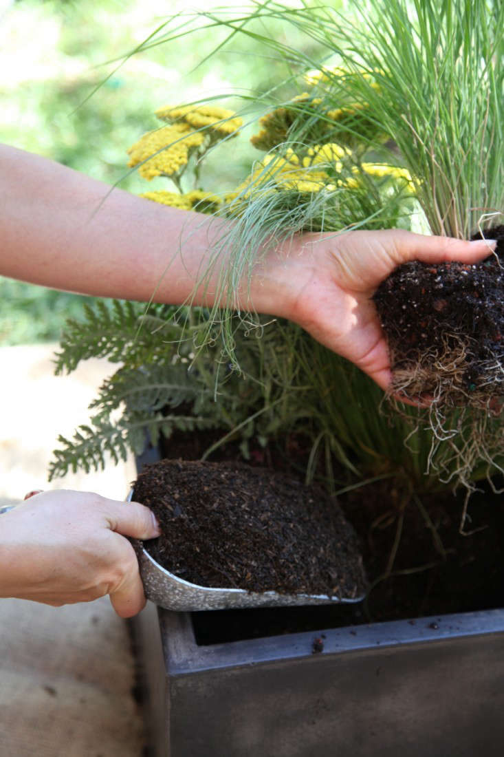 Container of the Week from Gardenista Planting a Container with Grasses