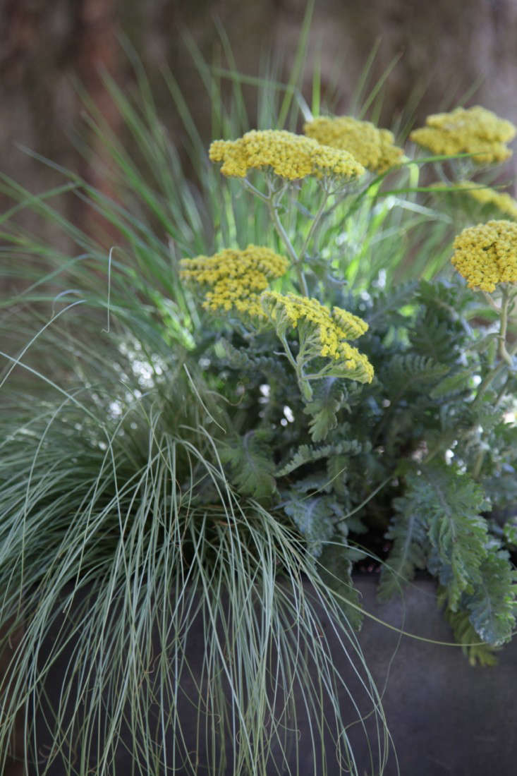 Container of the Week from Gardenista with Grasses