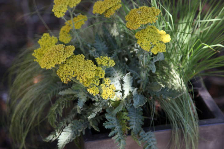 Container of the Week from Gardenista with Yellow Flowers Plated Among Grasses