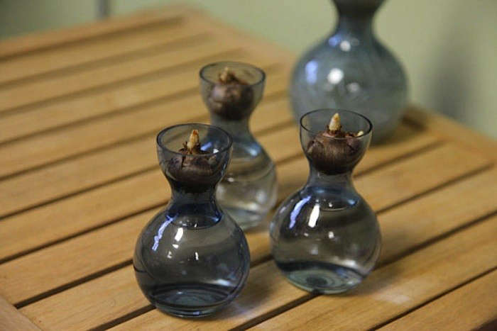 Crocus-Bulb-vases-Gardenista
