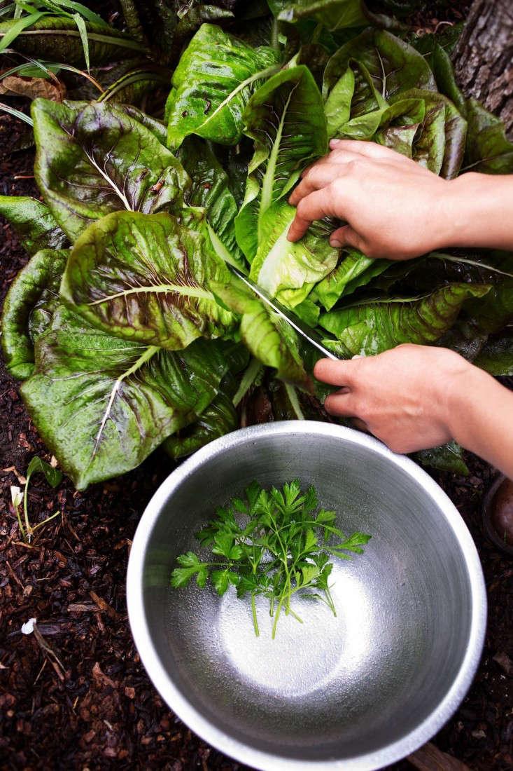 Cutting-garden-greens-gardenista-1