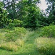 Deborah-Nevins_East-Hampton-long-grass_2-Gardenista