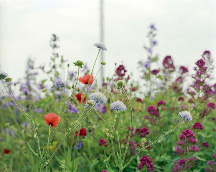 Derek-Jarman-garden-by-Howard-Sooley-4