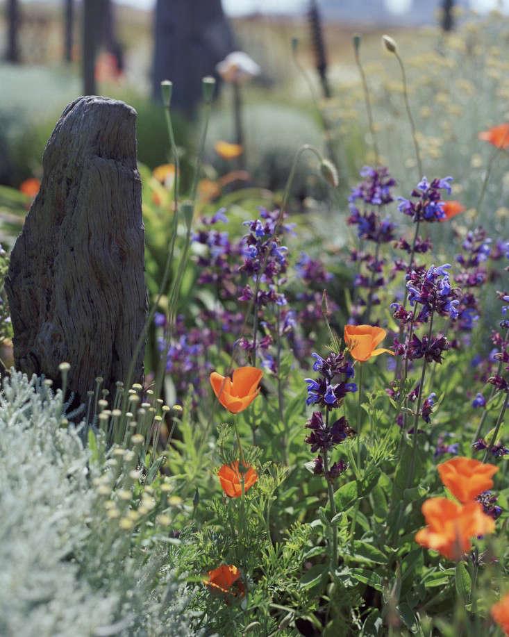 Derek-Jarman-garden-by-Howard-Sooley-6