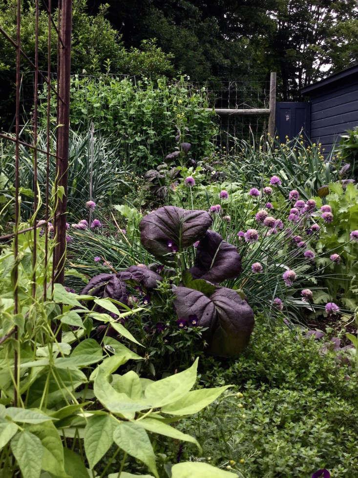 Design-Finalist-Betsy-Spears-Gardenista-2