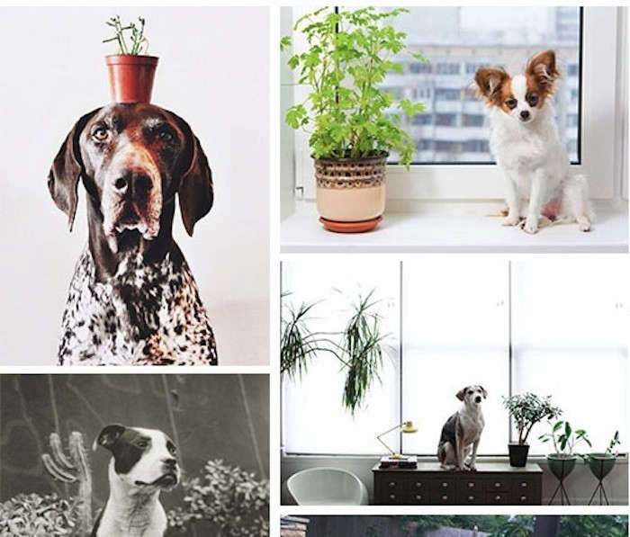 The week in review 15 links we 39 re thankful for gardenista for Easy houseplants safe for pets