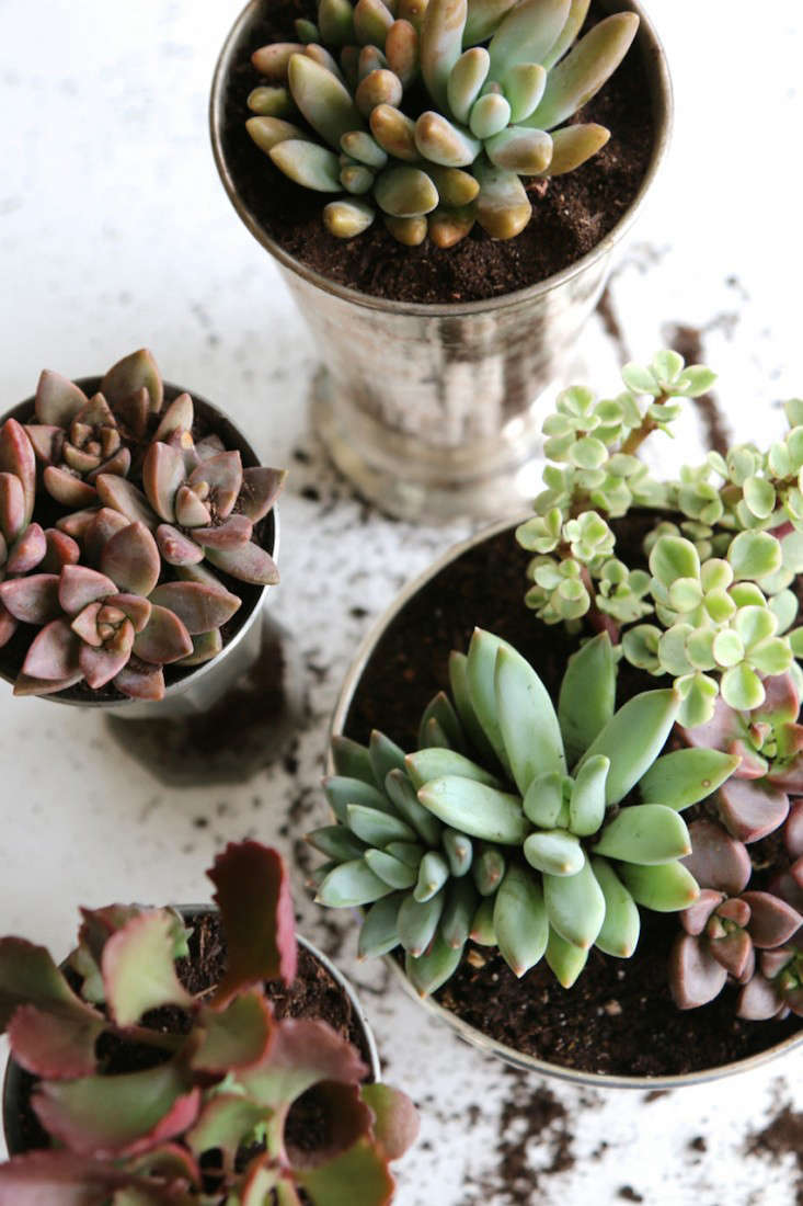 Early-Fall-Dinner-Party-Succulents-Meredith-Swinehart-Gardenista-5