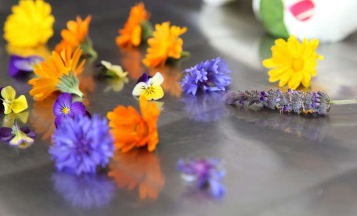 Edible Flowers to Decorate Goat Cheese at Harley Farms in California, Gardenista