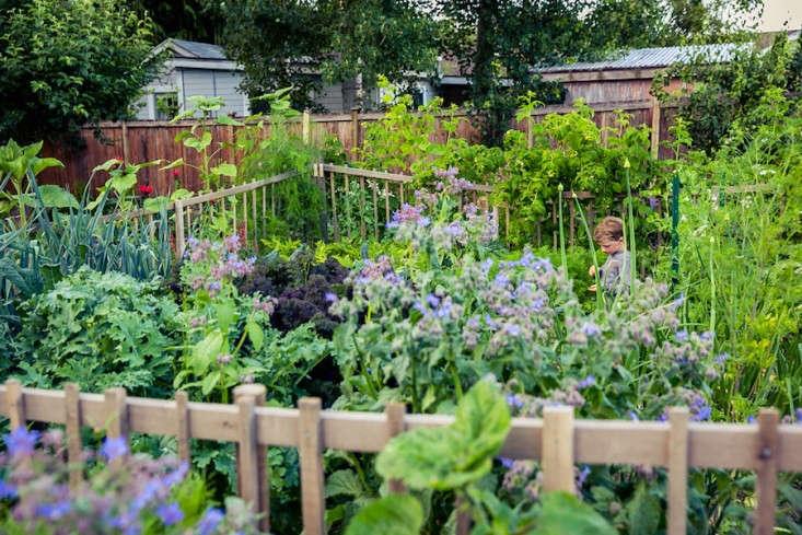 Vote for the Best Edible Garden in the Gardenista