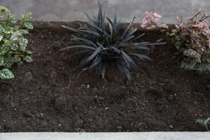 Empty Window Box Ready for Planting, with Black Mondo and Hypoestes, Gardenista