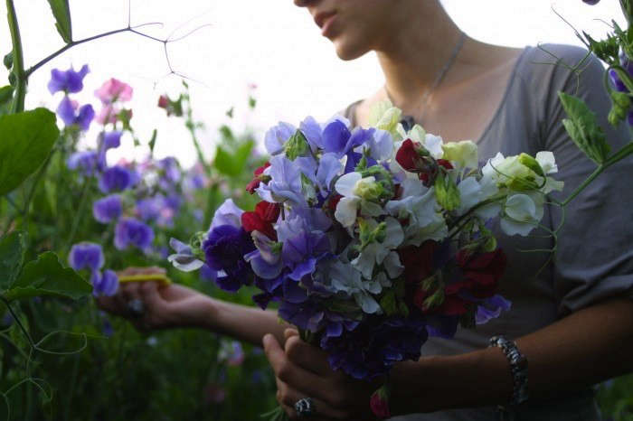 Ask The Expert 7 Tips To Grow Cut Flowers In A Tiny