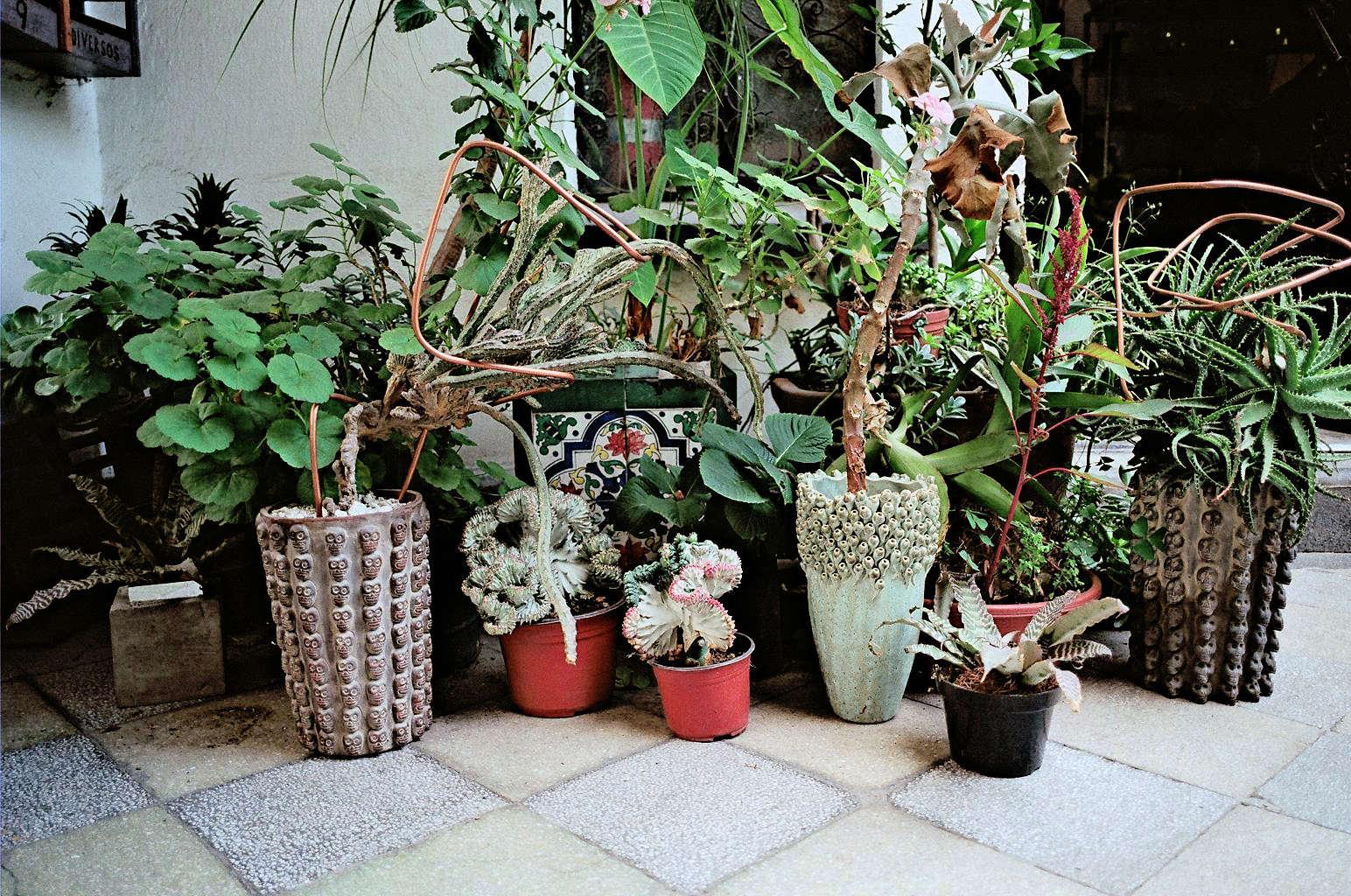 Freunde-von-Freunden-Alberto-Arango-Ramiro-Guerrero-025-gardenista