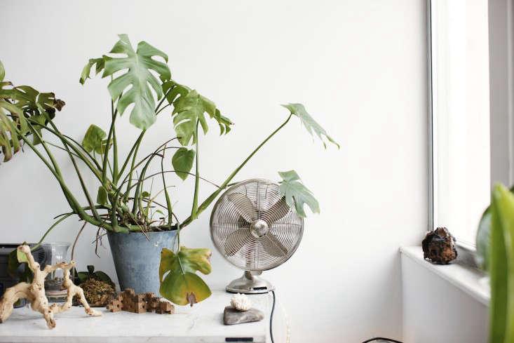 Freunde-von-Freunden-Huy-Bui007-gardenista