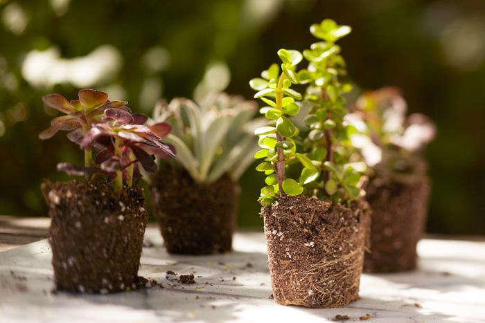 Gardenista.HowTo_.22